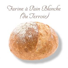 Farine Blanche Terroir